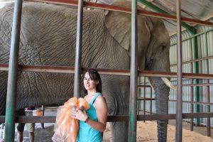 Danielle elephant 2
