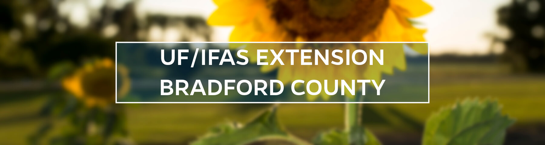 UF/IFAS Extension Bradford County