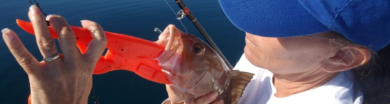 Fish being held with a descending device attached