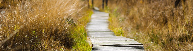 Biking and Hiking trail