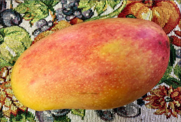 Freshly picked mango