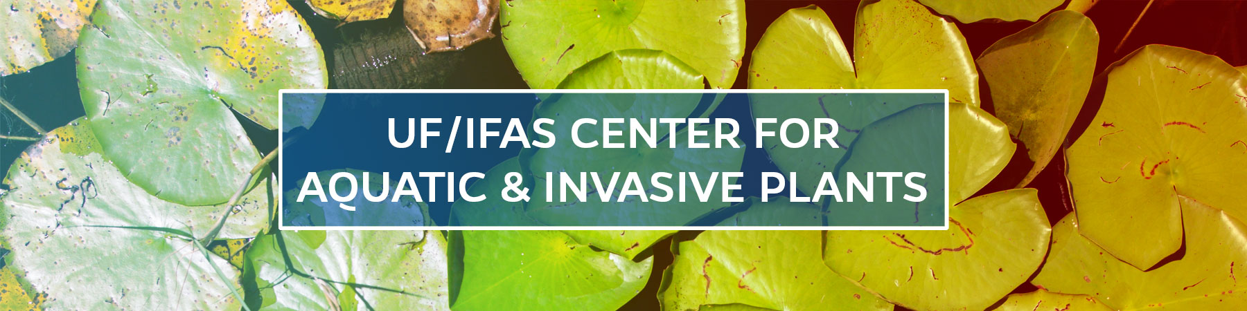 UF/IFAS Center for Aquatic and Invasive Plants