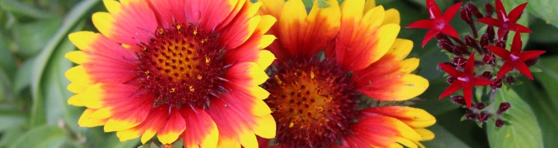 Bright flowers.