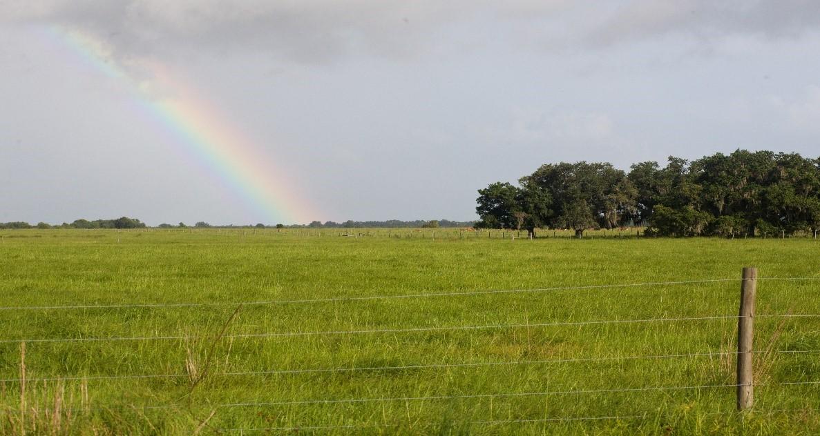 pasture with rainbow
