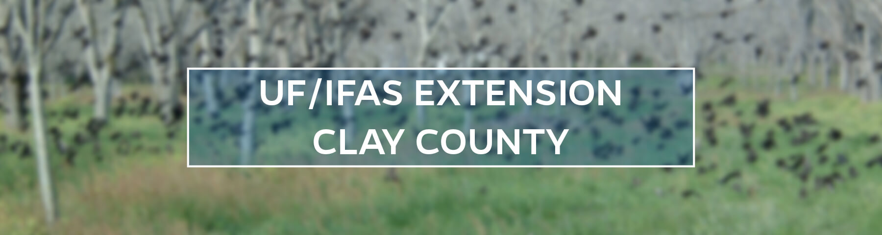 UF/IFAS Extension Clay County