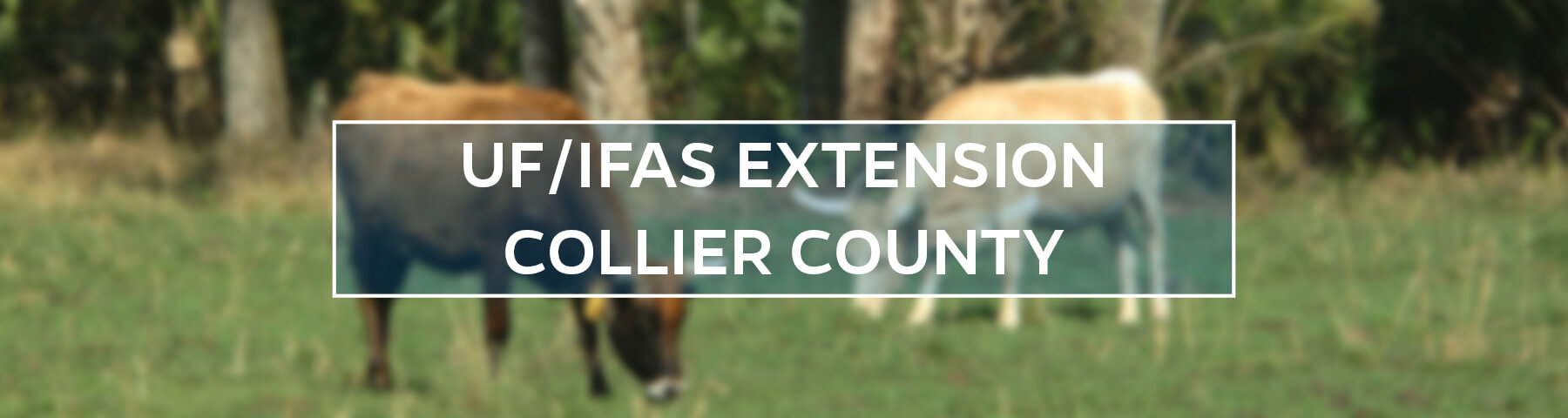 UF/IFAS Extension Collier County