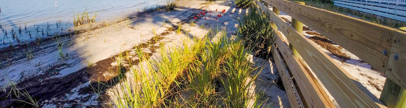 a shoreline with transplanted marsh grass