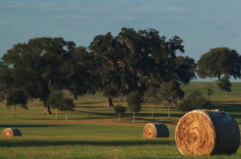 Hay bales in a field.