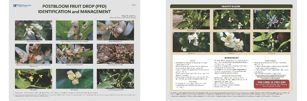 PFD brochure