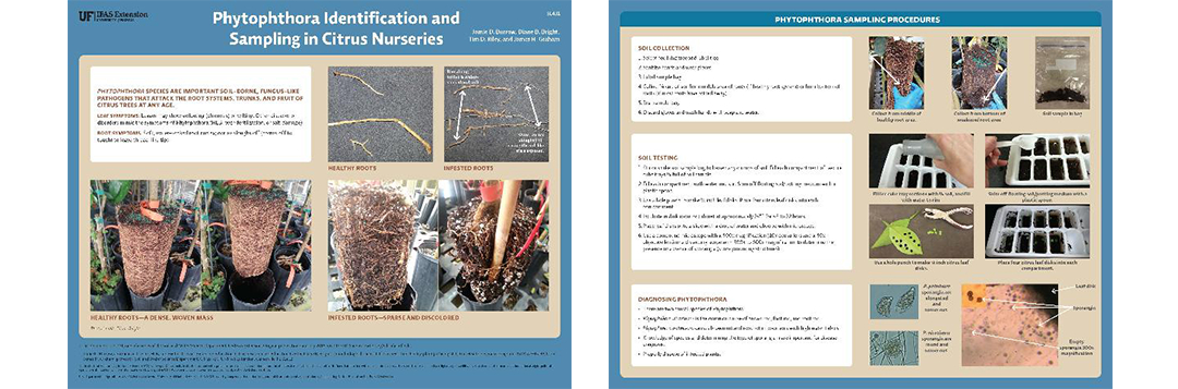 phytophthora id brochure
