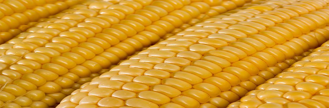 Corn, Husks, Vegetable, Maize, Grain.