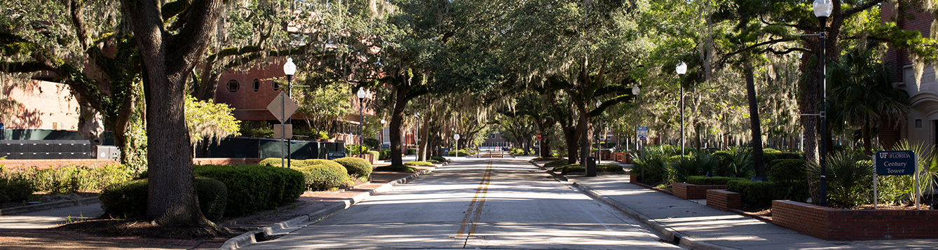 View down a tree-canopied street on the University of Florida Campus