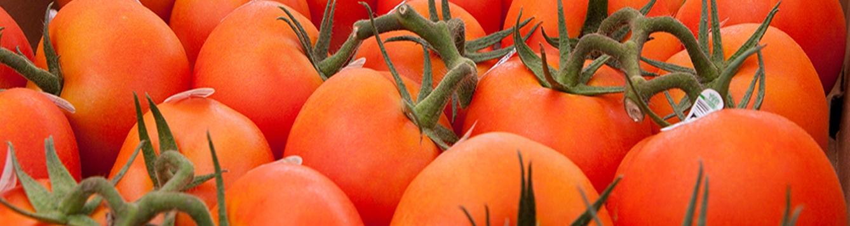 Freshly picked tomatoes.