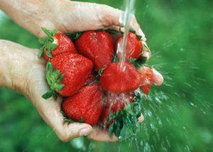 Hands holding strawberries under water