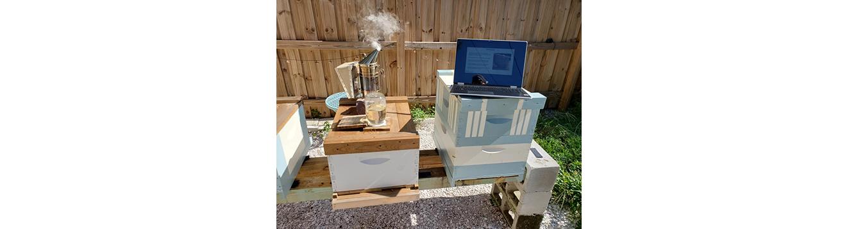 virtual bee college