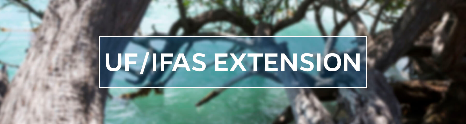 UF/IFAS Extension