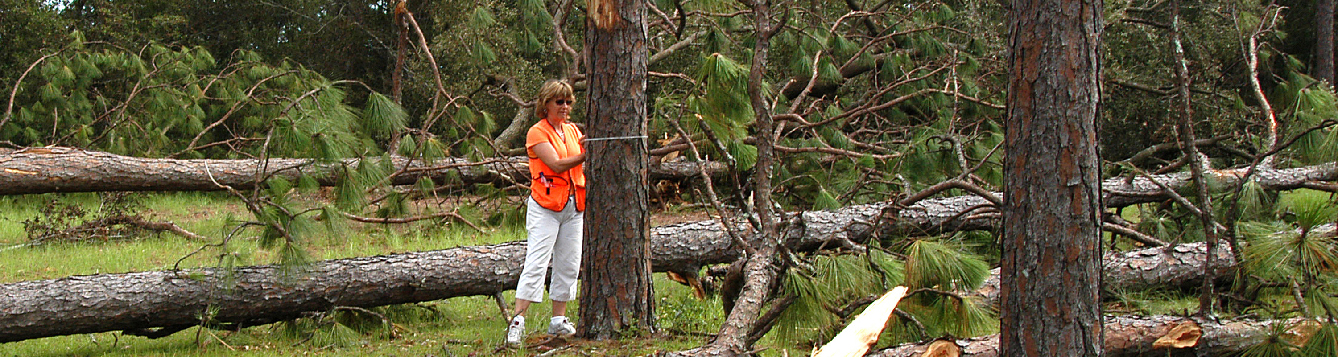 Mary Duryea surveys tree damage after a hurricane.