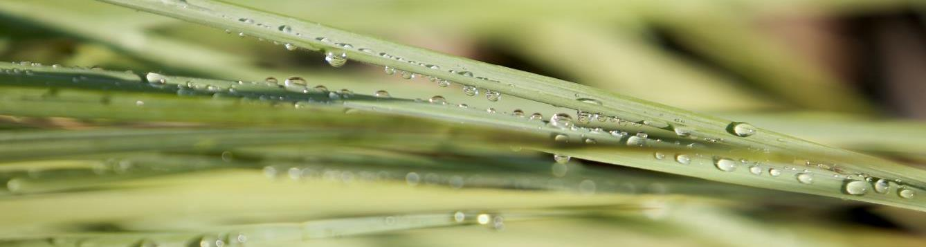 grass with water droplet