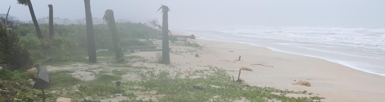storm ravaged trees on the beach