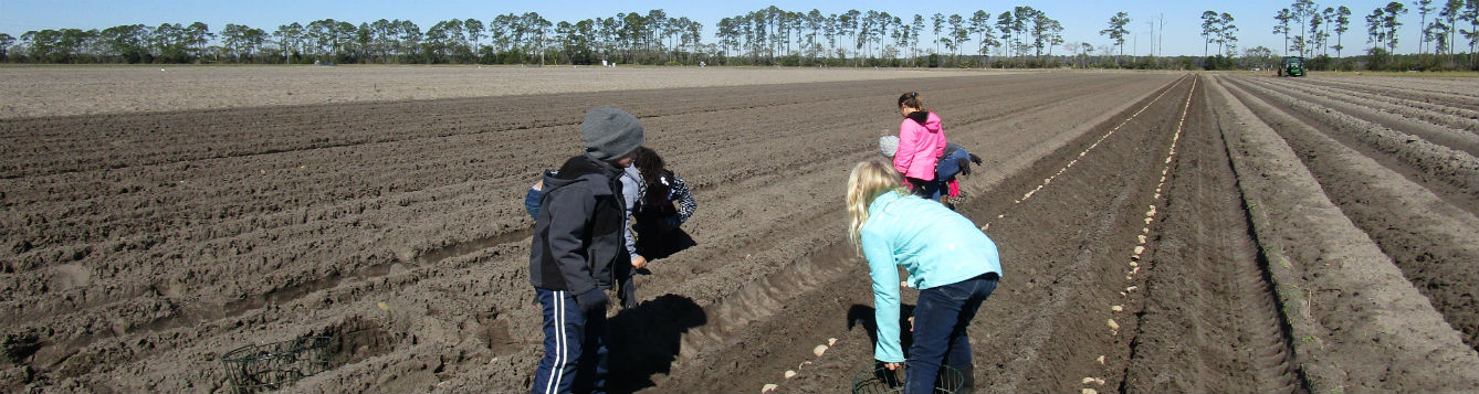 children planting potato in raised beds on farm