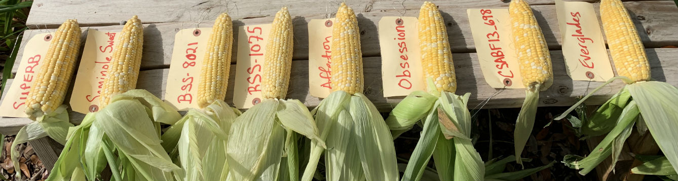 8 shucked ears of corn labeled by variety