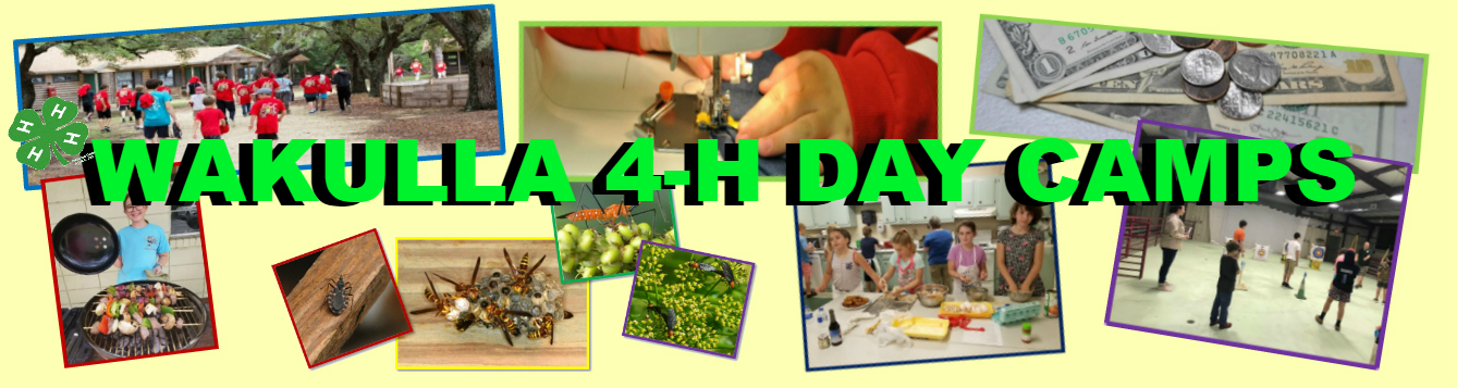 4-H Wakulla Day Camps feat