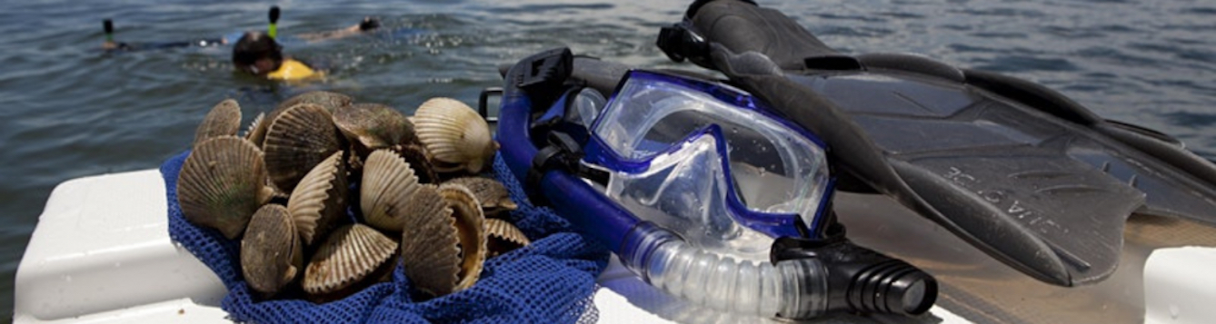Snorkeling gear and a bag of freshly caught scallops rest on a boat ledge.