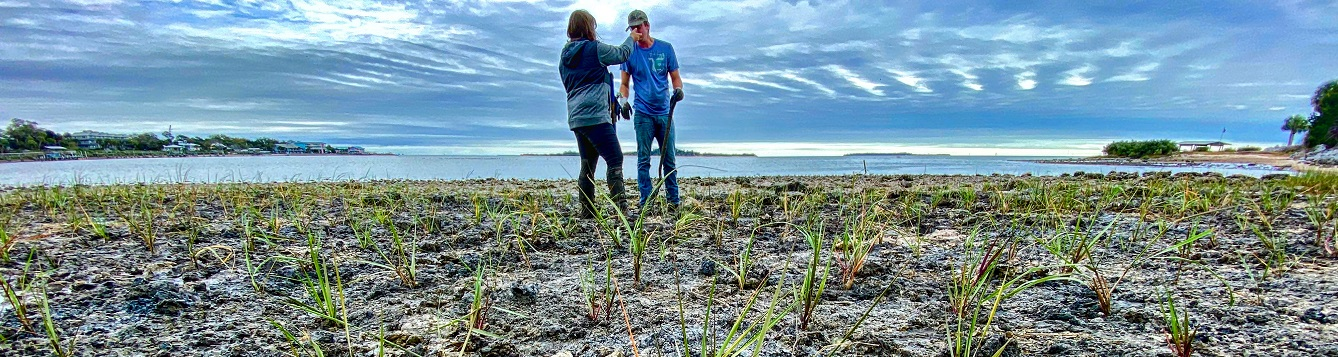 two volunteers in a recently planted marsh shoreline
