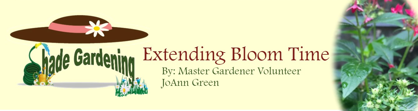 Extending Bloom Time October 2020 feat