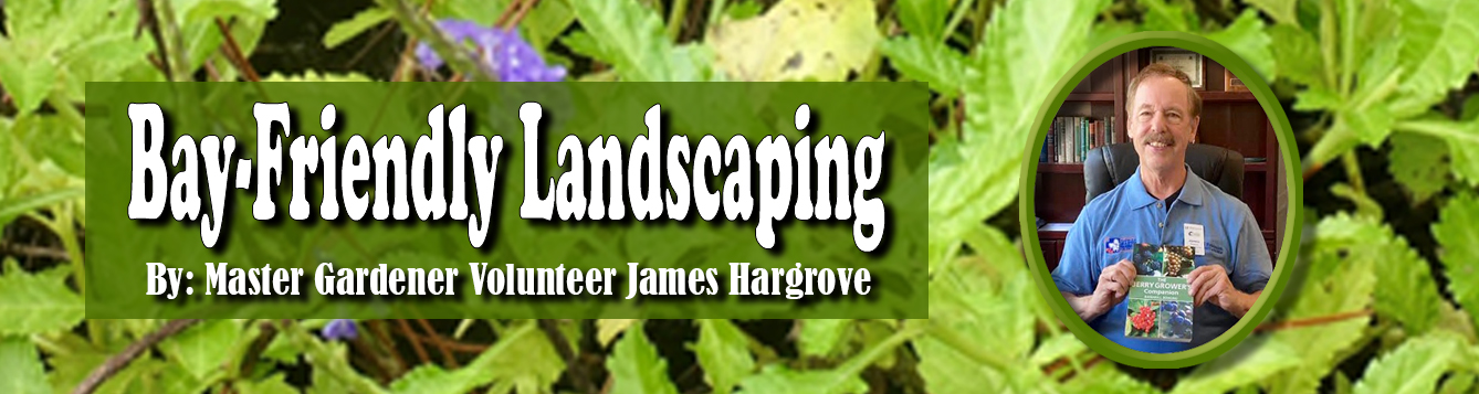 Bay-Friendly Landscaping feat