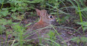 Rabbit WN 2-15-19 insert