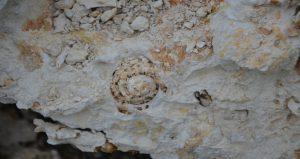 fossils1 WN 2-21-19 insert