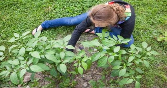 Teen gardening insert 5