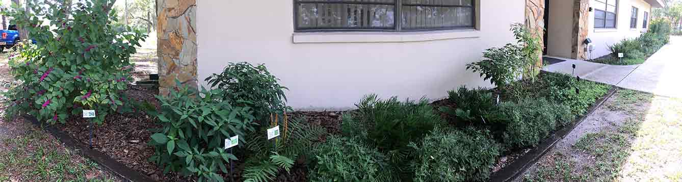 Photo of native plants in front of a building