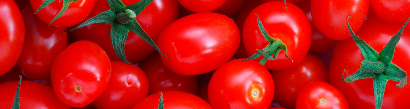 Lots of red tomatoes