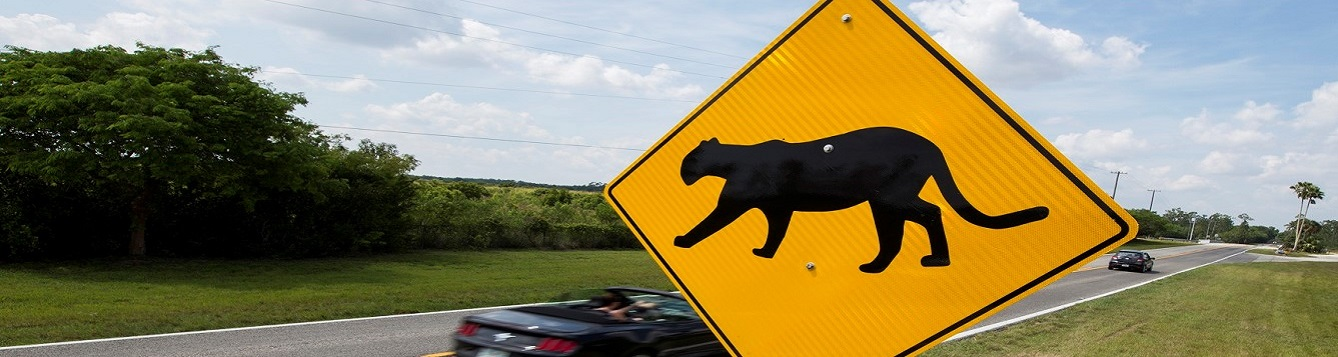 A panther crossing sign in the foreground with a speeding car in the background