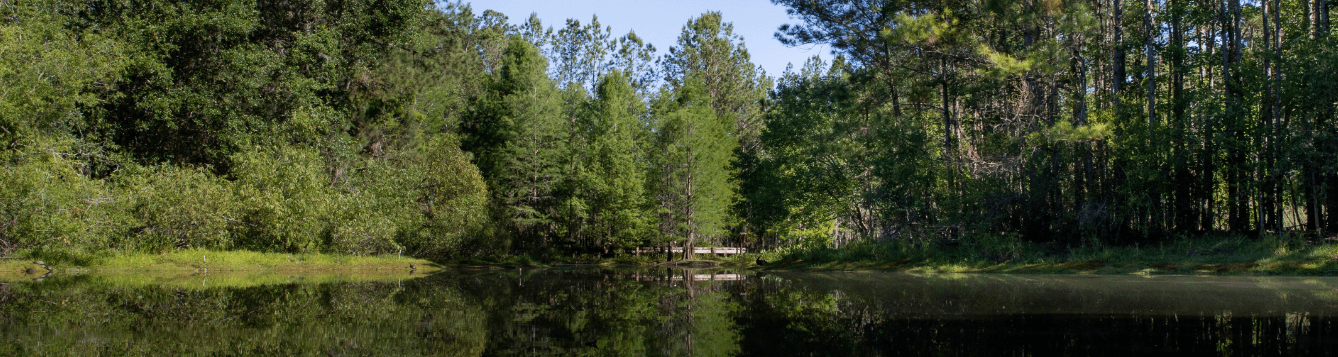 pond at Natural Areas Teaching Laboratory