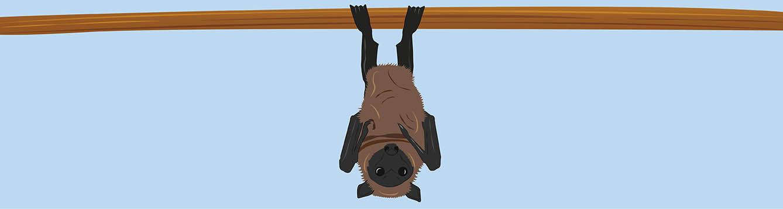 Illustration of a bat hanging upside down,