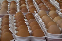 Open cartons of brown eggs