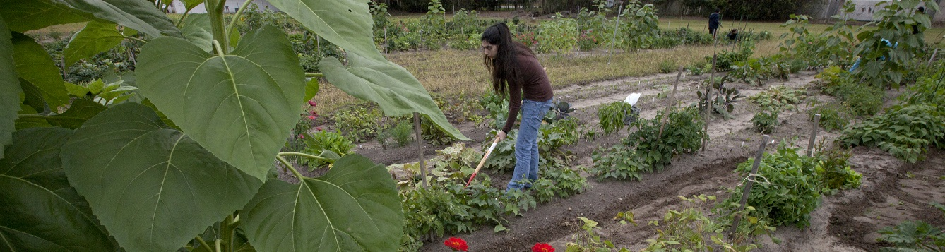 woman working in a vegetable garden