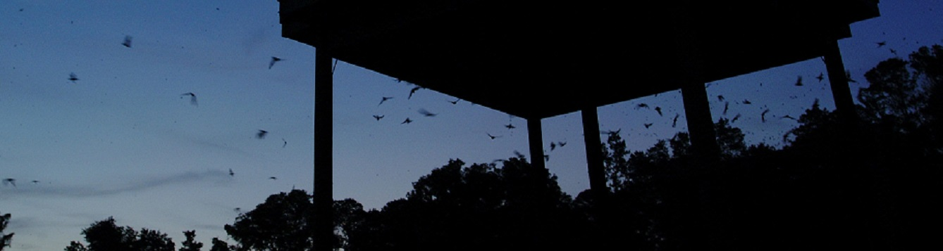 bats emerging from a large bat house at dusk