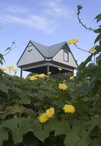 Large wooden bat house among garden plants