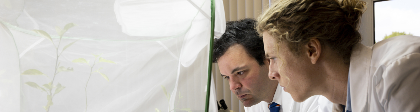 Dr. Lorenzo Rossi is an award-winning professor of plant root biology. In this image he works with summer intern Johnny Capen