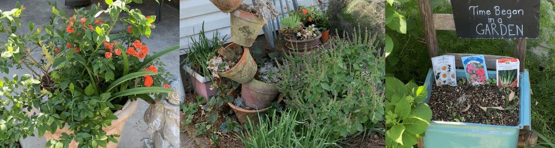 Container Garden Header