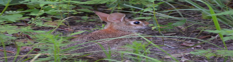 Rabbit WN 2-15-19 feat