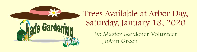 Shady Garden Native Trees January 2020