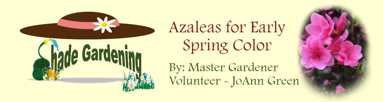 Shady Garden Azaleas March 2020