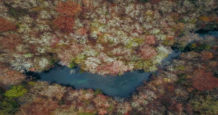 Wakulla Spring water brown insert 1