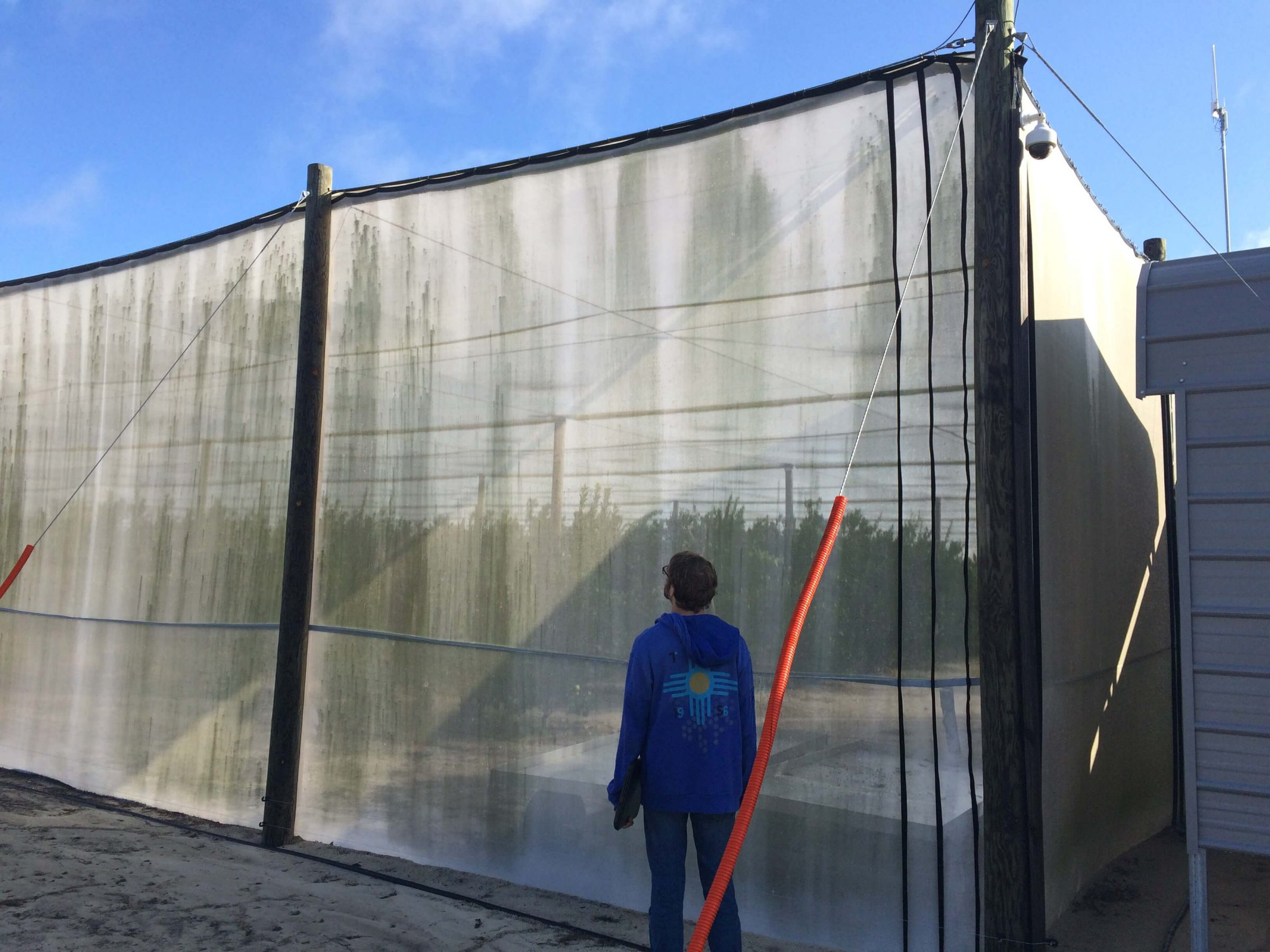 Citrus Under Protective Screen (CUPS) system grows citrus under an insect excluding screen.