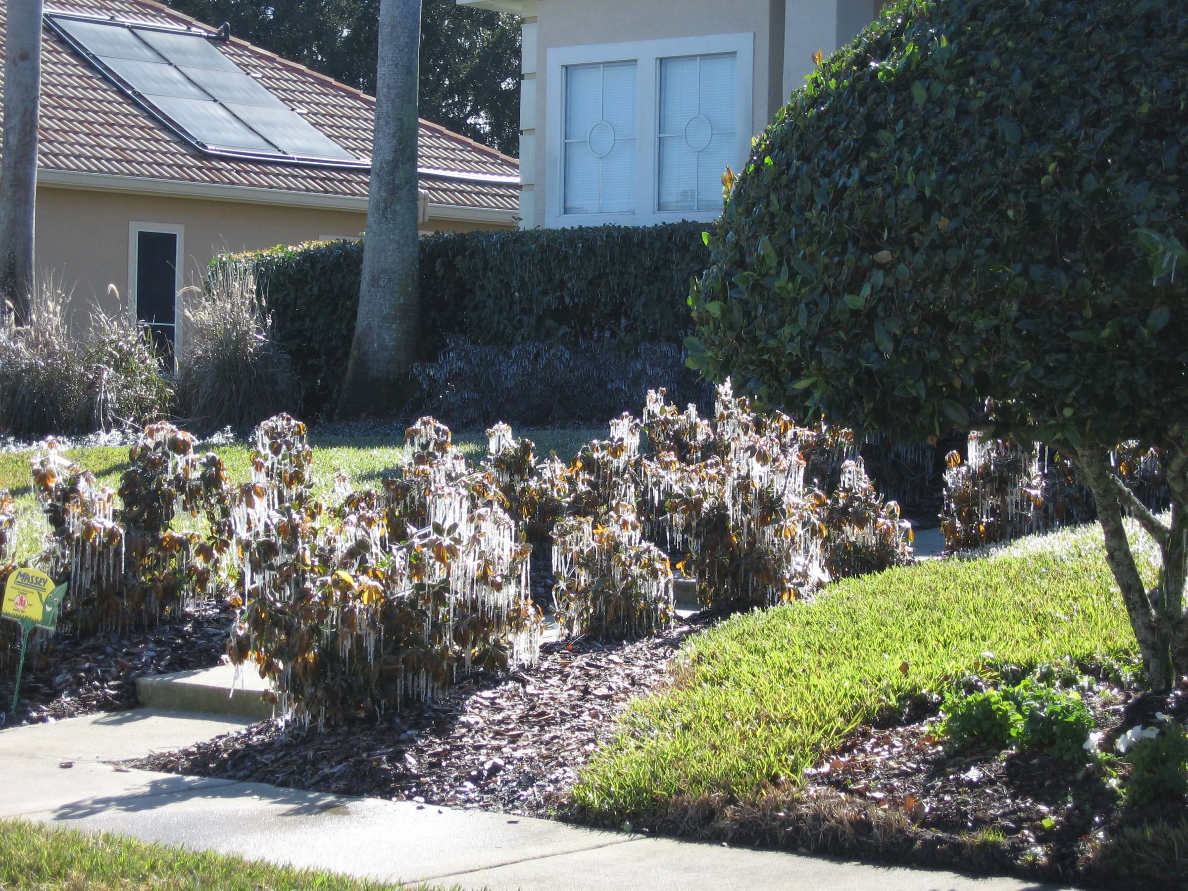 Irrigation left on during a cold event can spell disaster in the landscape.